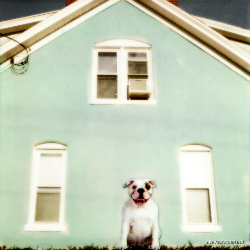 Dog and House by stevebohnstedt
