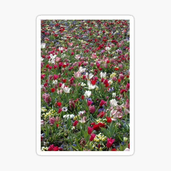 A carpet of colourful spring flowers Sticker