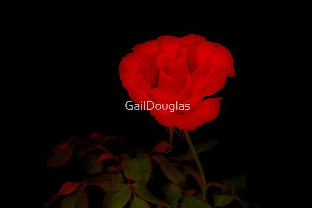 Rose Perfect by GailDouglas