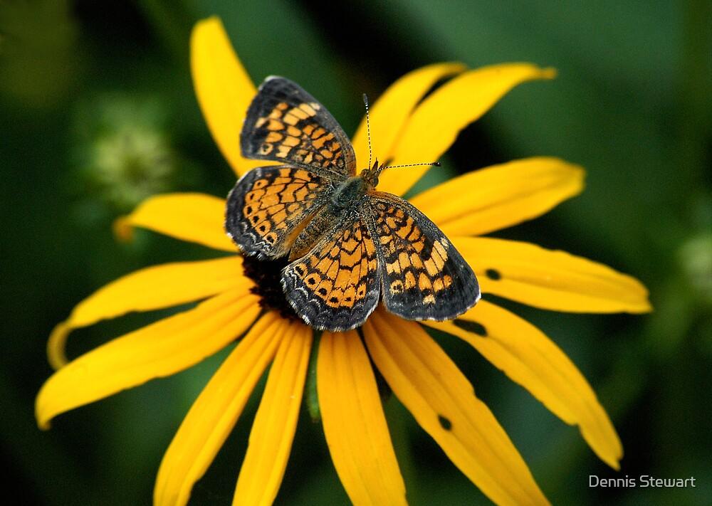 Resting Butterfly by Dennis Stewart