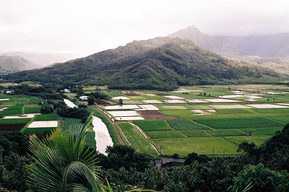 Hanalei Valley Kauai by Dennis Begnoche Jr.