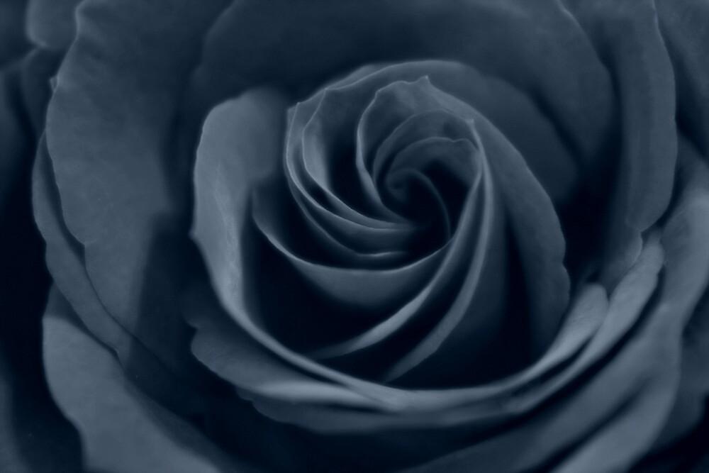 Black velvet by Graham Ettridge