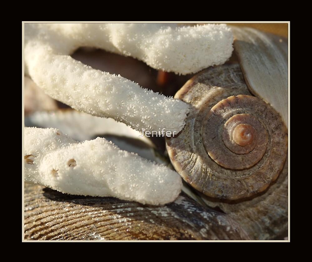 Coral & Shells by Jenifer