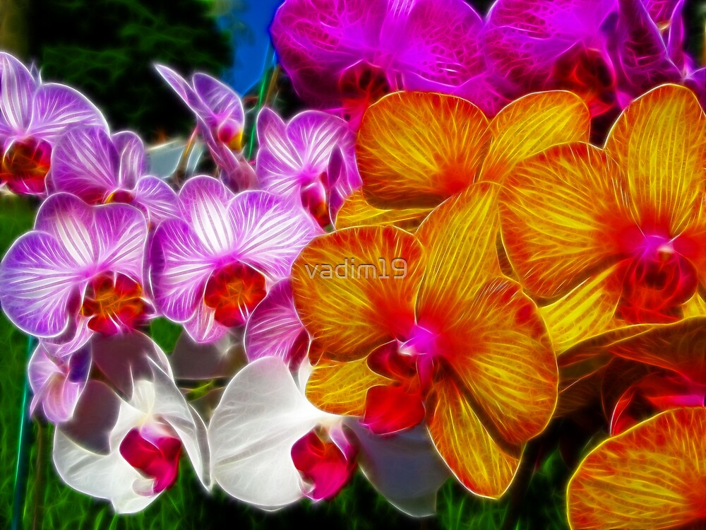 Bunch of Orchids by vadim19