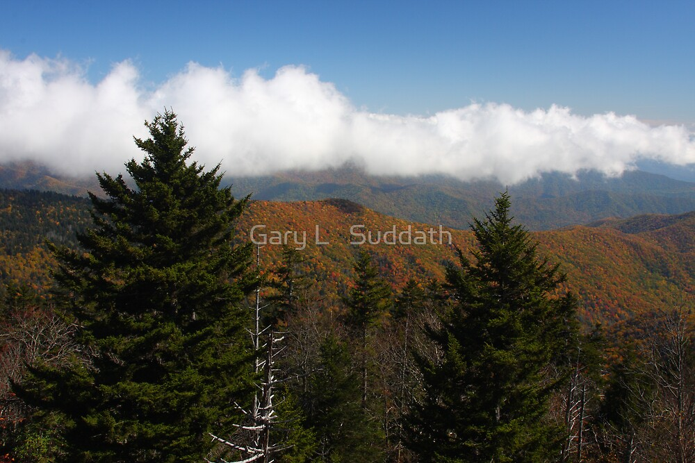 Cotton Topped by Gary L   Suddath