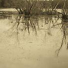 lago by Gladys Saravia