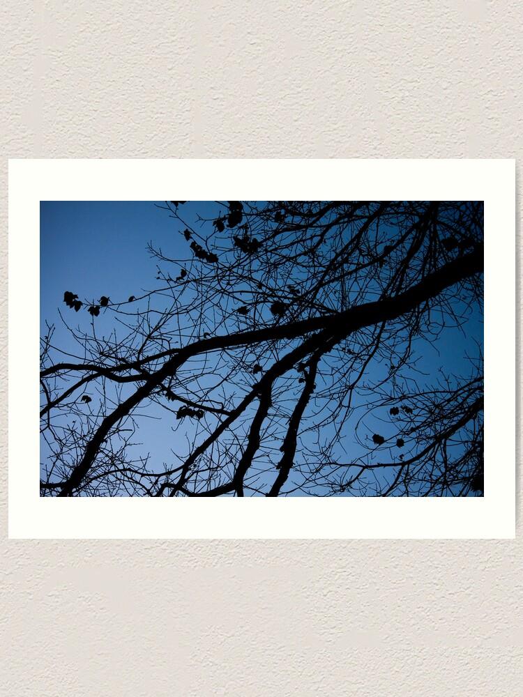 Alternate view of Tree in the pre-dawn light Art Print