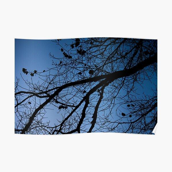 Tree in the pre-dawn light Poster