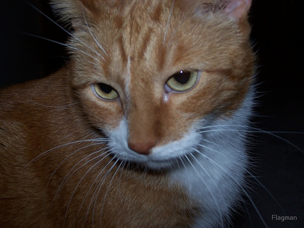 Red the cat by Flagman