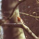 """ Winter Robin "" by Richard Couchman"
