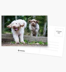 Italian Spinone Dogs in Action ~ Annabelle and Thane  Postcards