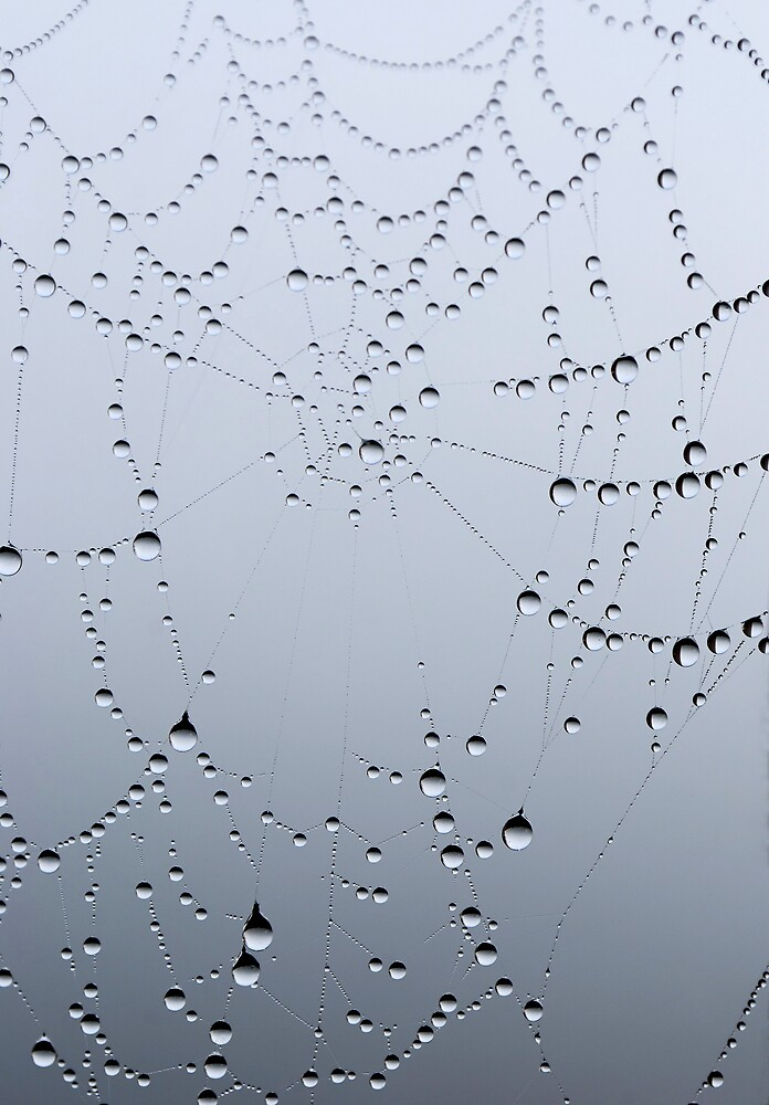 Diamonds in the Mist by Johanne Brunet