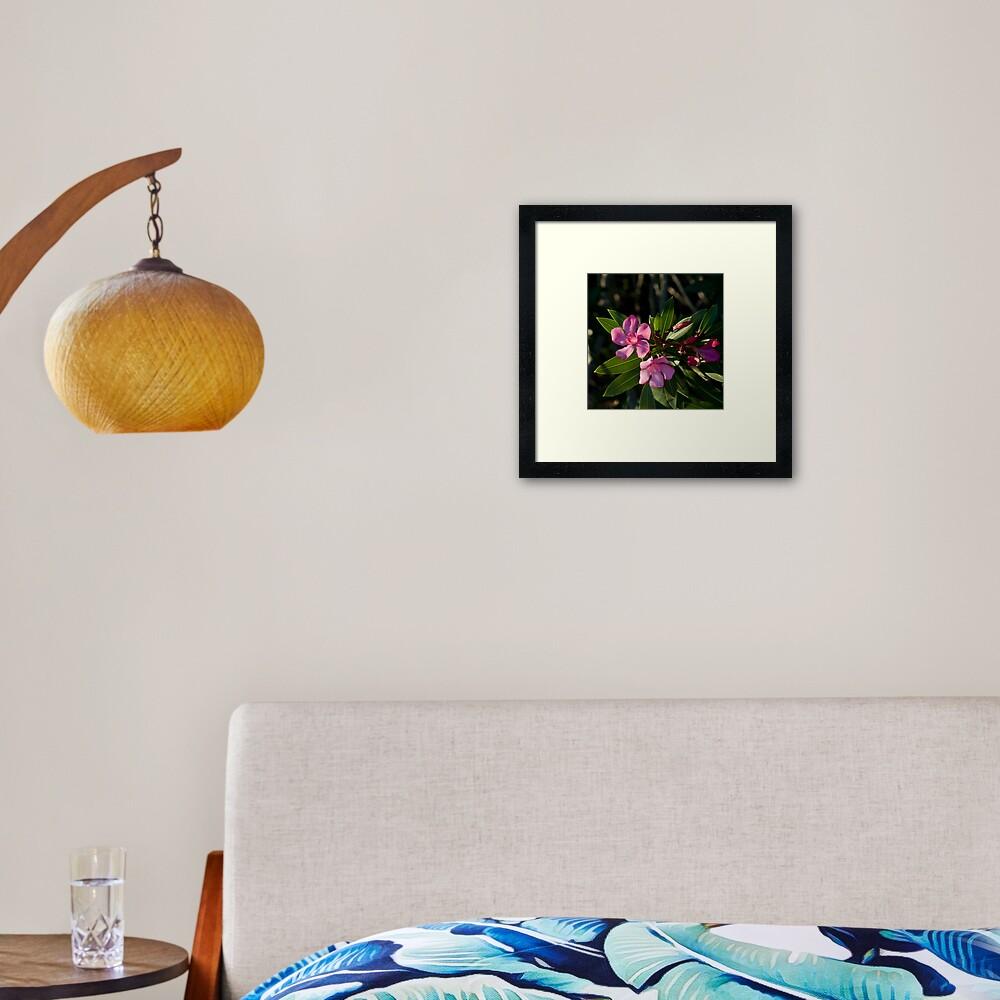 Pink Oleander Framed Art Print