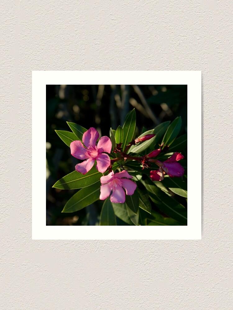 Alternate view of Pink Oleander Art Print