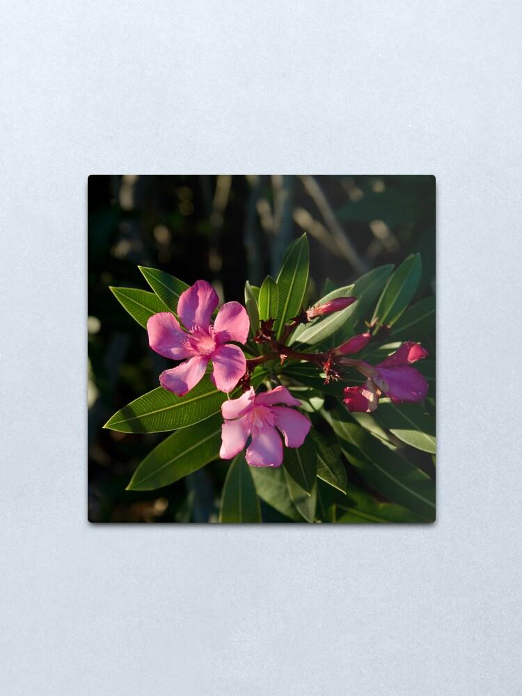 Alternate view of Pink Oleander Metal Print