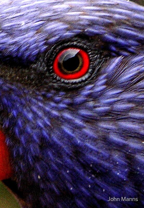 Birds Eye by Johnnie