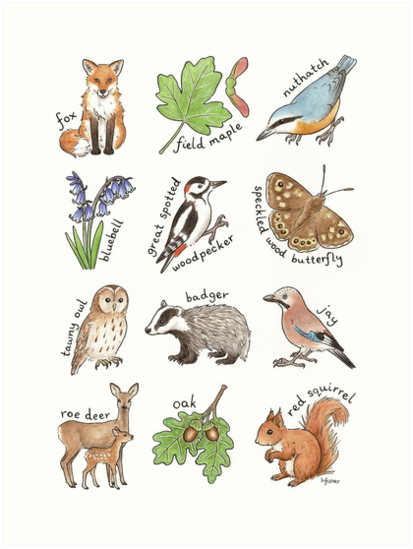 British Woodland Wildlife by Hazel Fisher