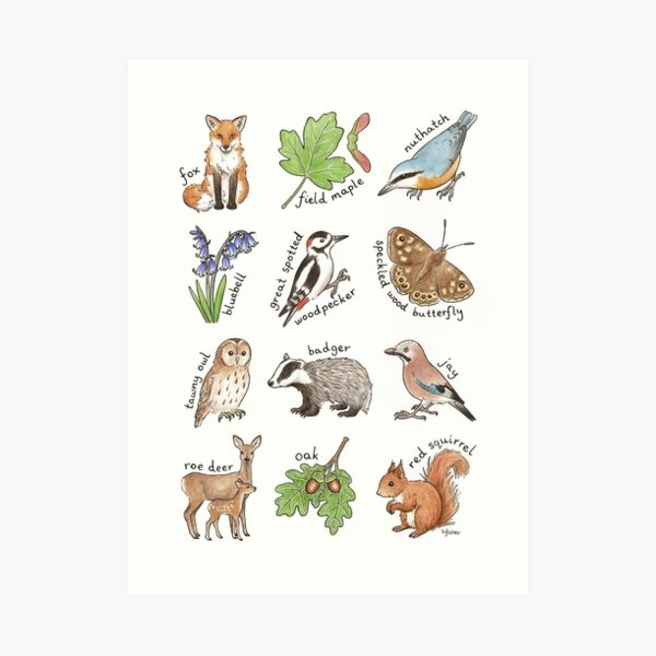 British Woodland Wildlife Art Print