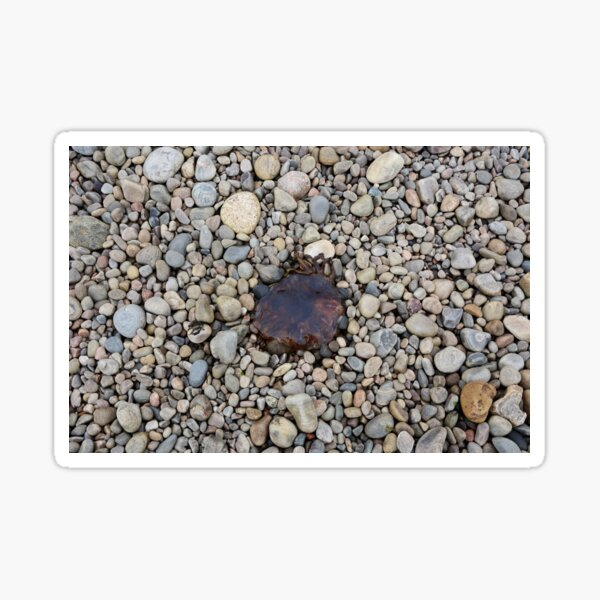 Jellyfish on a bed of pebbles Sticker