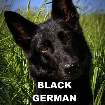 german shepherd black love with picture by marasdaughter