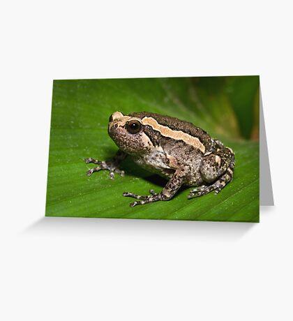 Asian Bullfrog Greeting Card