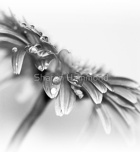 Hello Petals by Sharon Hammond