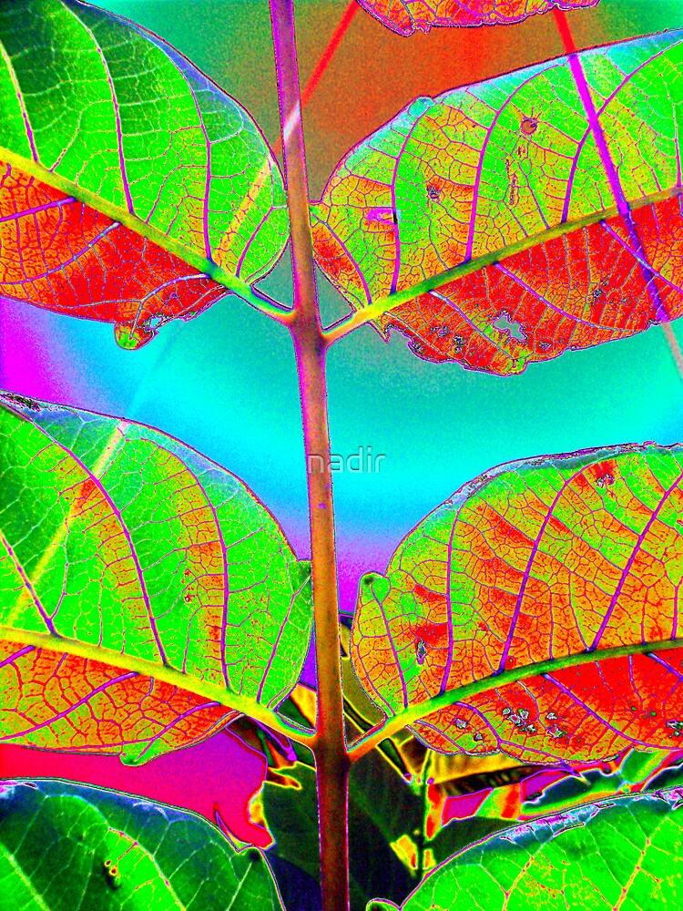 solarized leaf3 by nadir