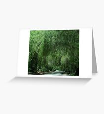 Elegant Weeping Willow Trees....... Greeting Card