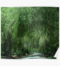 Elegant Weeping Willow Trees....... Poster