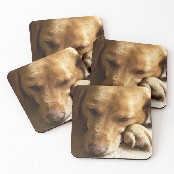 Willow the Wanderer sleeping Coasters (Set of 4)