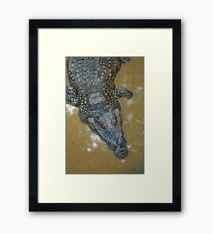 Thai Croc Framed Print