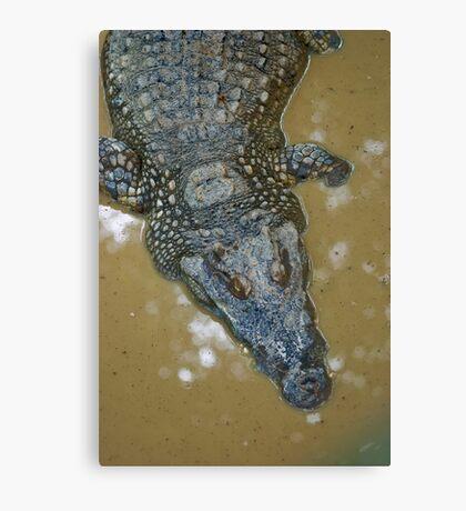Thai Croc Canvas Print