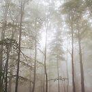 Autumn's Fog by Dominika Aniola
