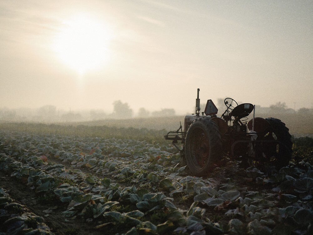 Dawn in the Vegetable Field by Kurt Kamka