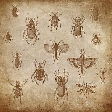 Collection of Insects - vintage Expedition by 0hmc