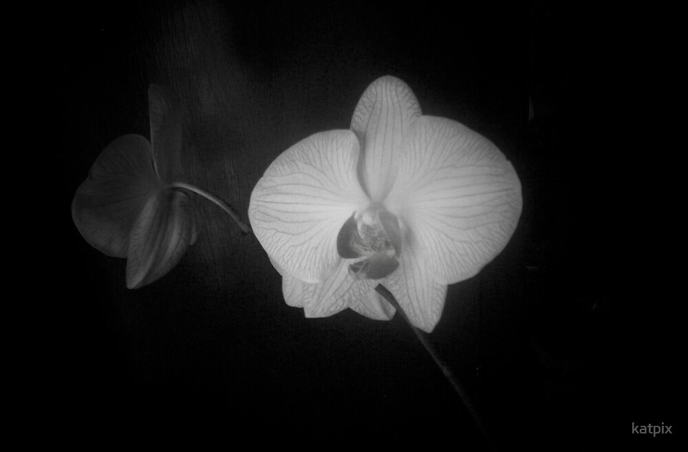 White Orchid by katpix