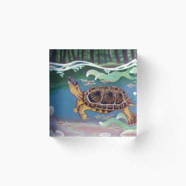Wood Turtle Color Pencil Artwork Acrylic Block
