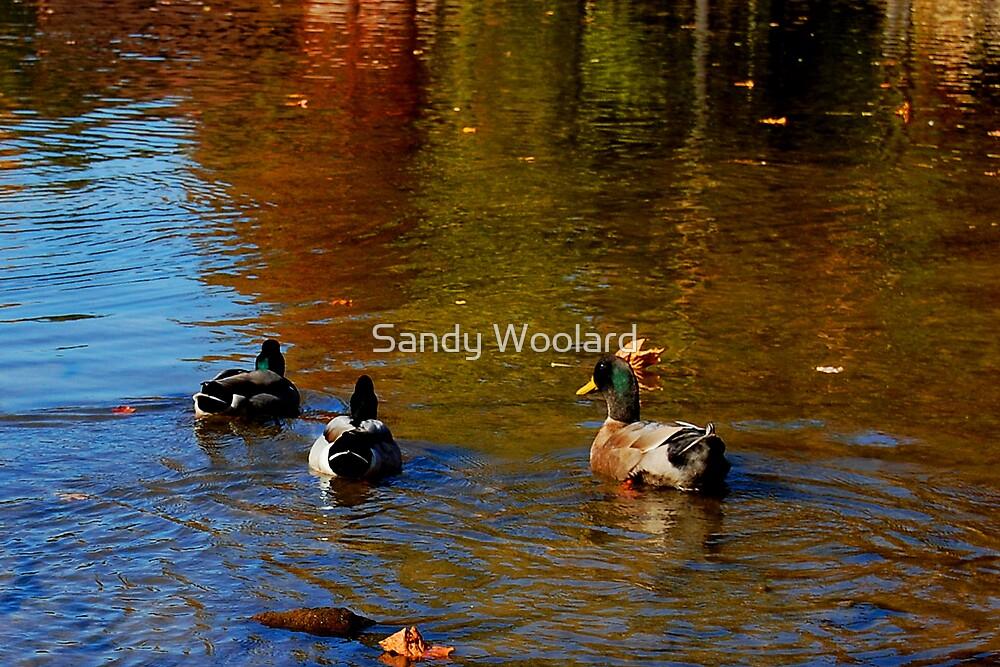 Early Autumn Swim by Sandy Woolard