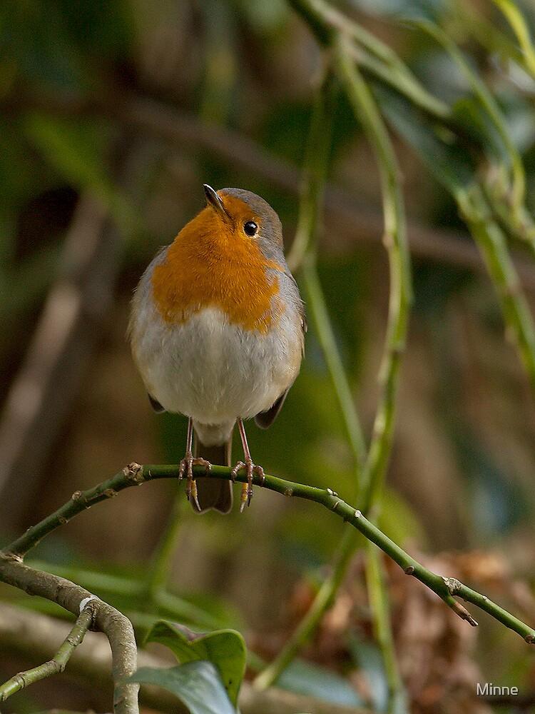 Robin by Minne
