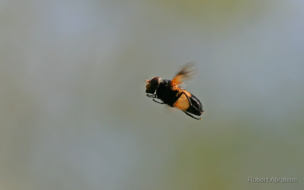 Hoverfly In Flight by Robert Abraham