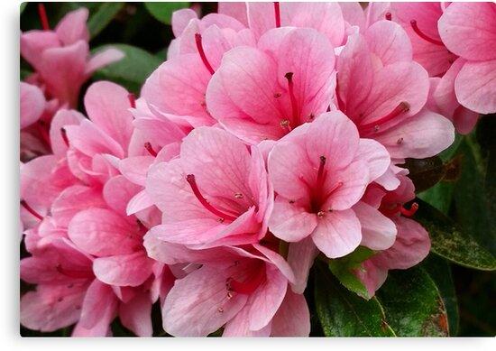 Bloom by Bluebarnjosh