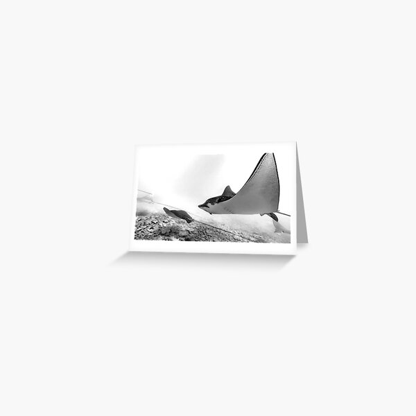 Eagle Rays Greeting Card