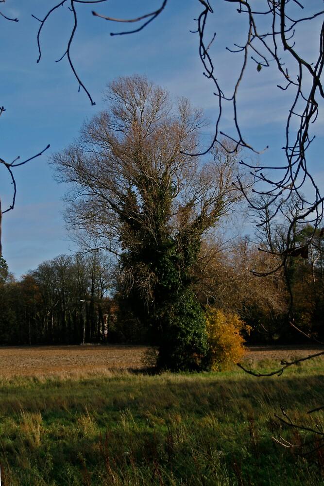 Autumn tree by Ann Heffron