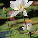 VIBRANT LOTUS by mc27