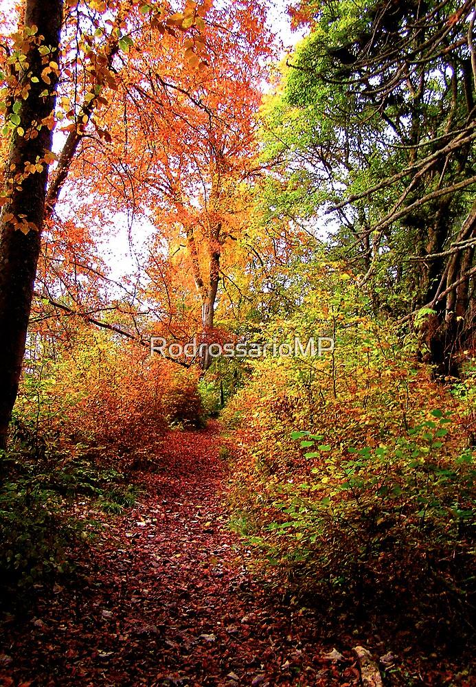 An  Autumn  Ramble by RodrossarioMP