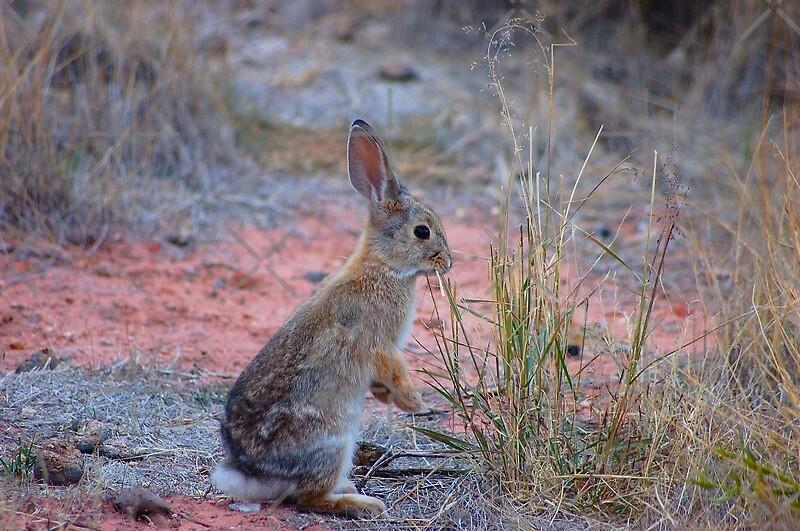 Rainbow rabbit by loiteke