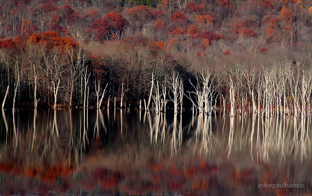 reflections by mikepaulhamus