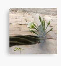 Princess of the Night - Blooming against Urban Wall Metal Print