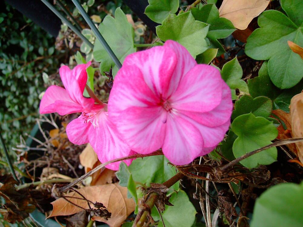pink flower by kroniclove