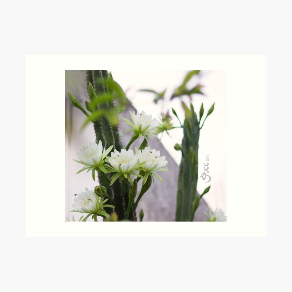 Princess of the Night - Blooming in Abundance Art Print